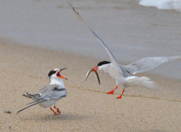 Viajar a Islas: Pájaros en una isla