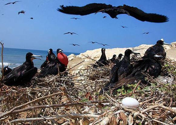 Viajar a Islas: Vida silvestre en islas