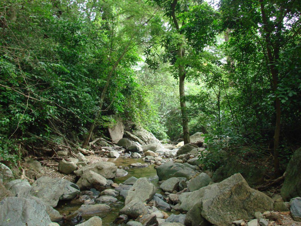 Cerro Copey flora y vegetacion
