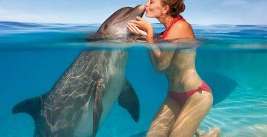donde ver delfines en Isla Margarita