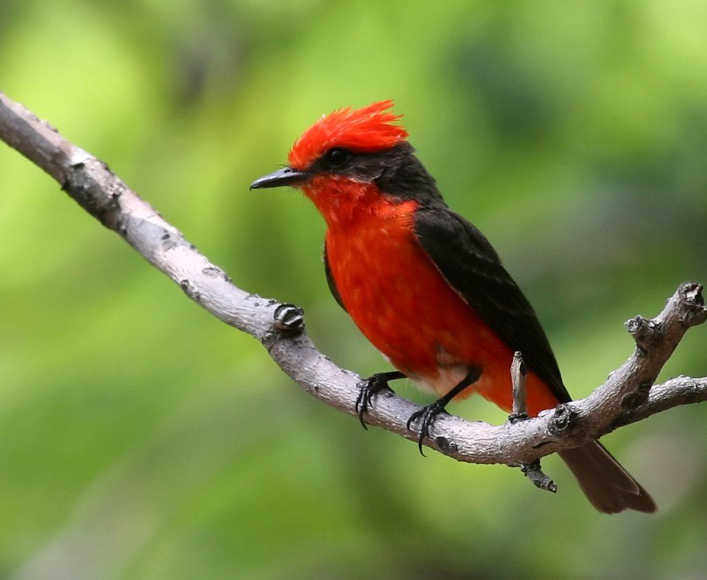 Fauna del Cerro Copey