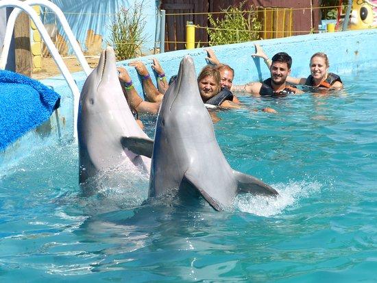 nado con delfines Isla Margarita