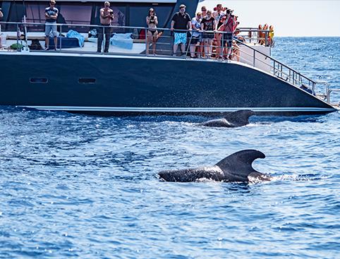 Tenerife con niños: avistamiento de ballenas y delfines en Tenerife