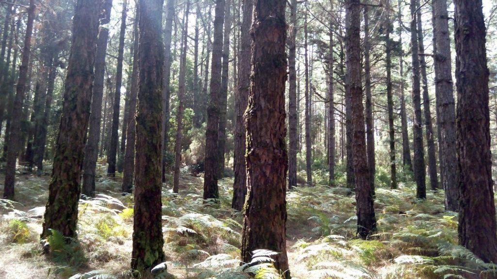 Tenerife con niños: bosque de la esperanza en la laguna tenerife