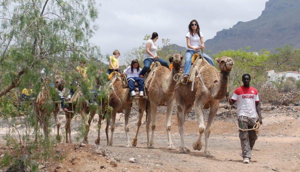 Tenerife con niños: paseos en camello en Camel Park en Tenerife