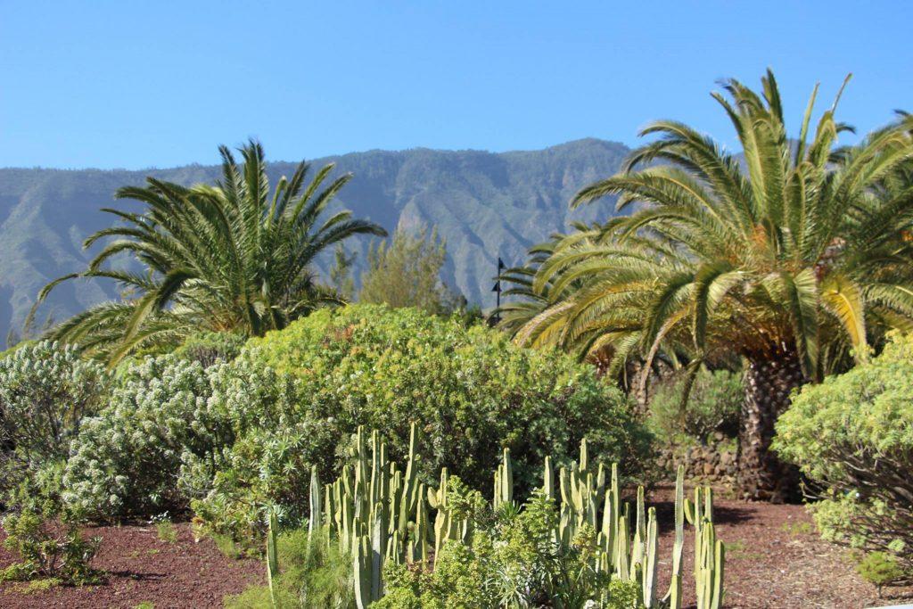 Tenerife con niños: Jardin Botanico Piramides de Güimar