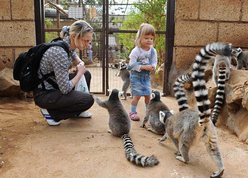 Tenerife con niños: Monkey Park Tenerife