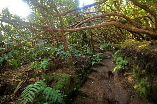 Tenerife con niños: sendero del bosque encantado parque rural de anaga tenerife