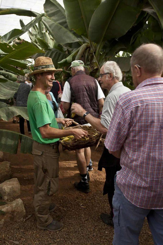 Tenerife con niños: Visita guiada Banana Experience Finca Las Margaritas
