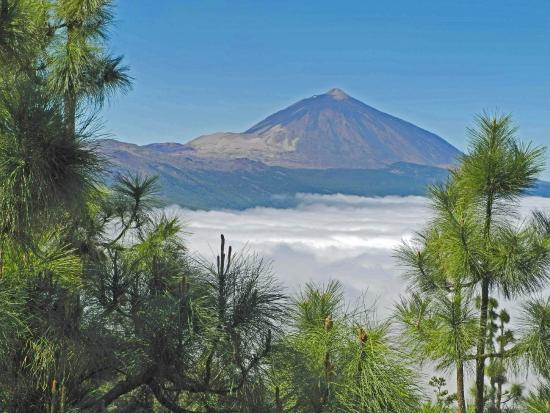 Tenerife con niños: vista del Teide bosque de la esperanza tenerife