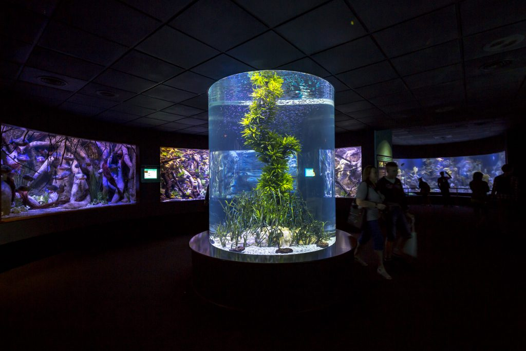 Tenerife con niños: acuario loro parque tenerife