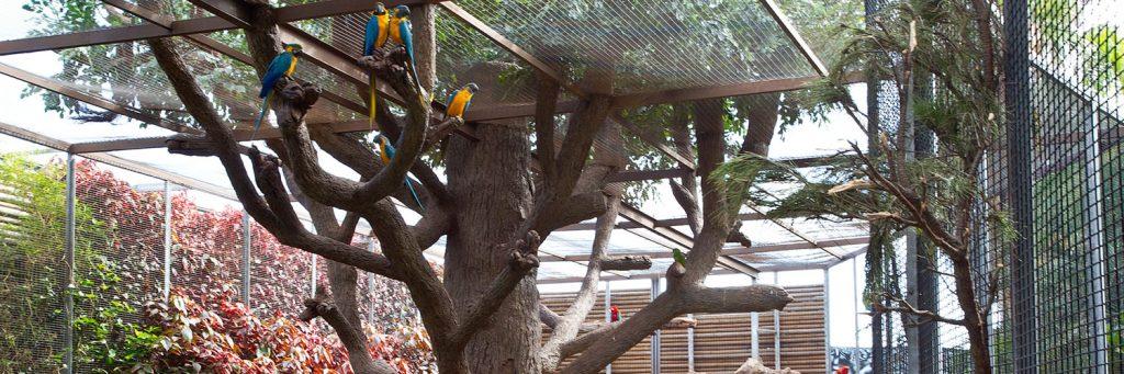 Tenerife con niños: aviario loro parque tenerife