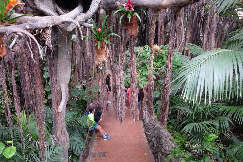 Tenerife con niños: jungla ara loro parque tenerife