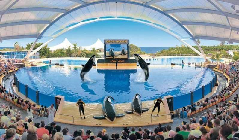 Tenerife con niños: orca ocean loro parque tenerife