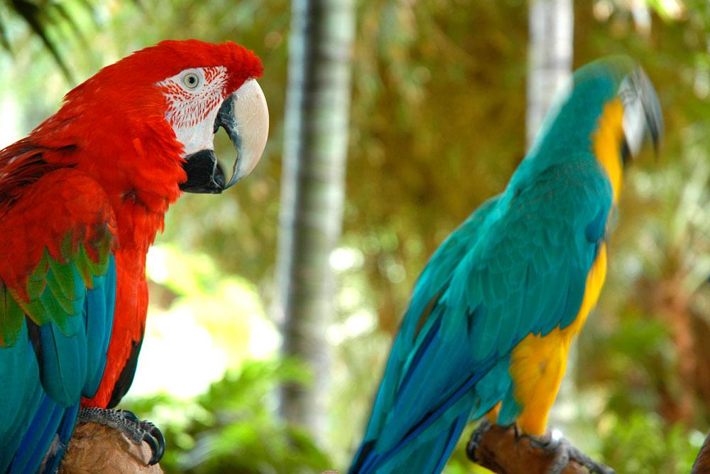 Tenerife con niños: Papagayos Loro Parque Tenerife