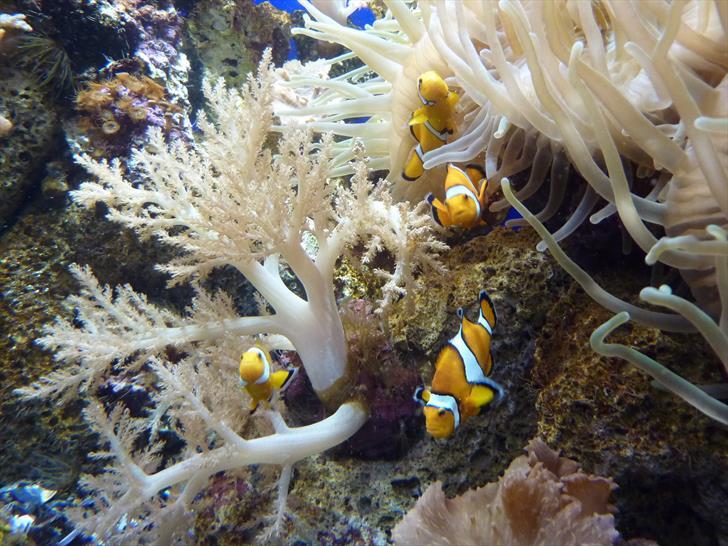 Tenerife con niños: peces loro parque tenerife