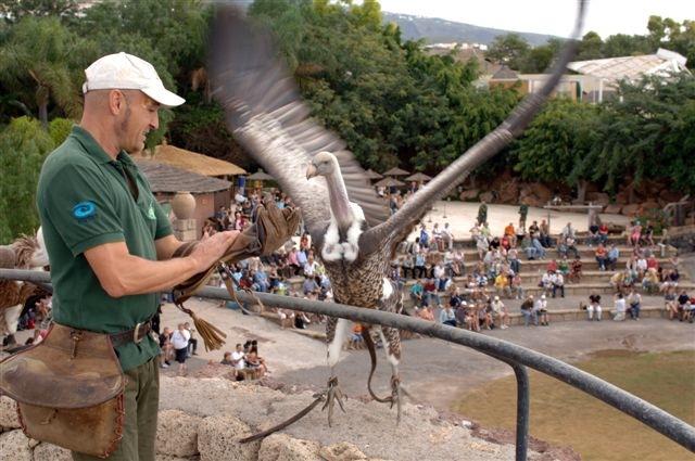 Tenerife con niños: show de aves rapaces Jungle Park Tenerife