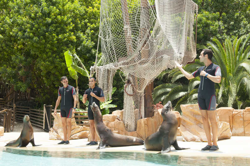 Tenerife con niños: show de leones marinos Jungle Park Tenerife